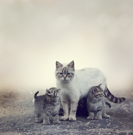 Homeless Kittens  Beside Their Mother Cat Stok Fotoğraf