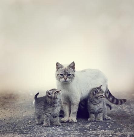 vagabundos: Gatitos sin hogar al lado de su madre Gato