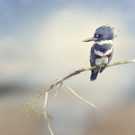 Digital Painting Of Belted Kingfisher