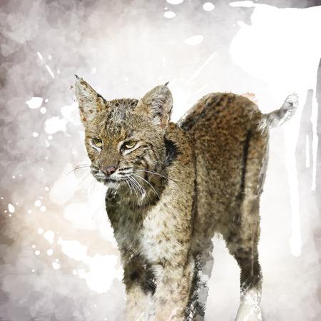 bobcat: Digital Painting Of Bobcat Portrait Stock Photo