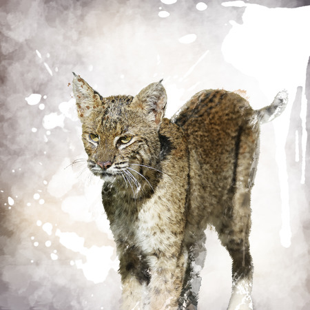 lince rojo: Pintura digital de Bobcat Retrato