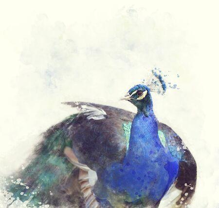peafowl: Digital Painting Of Indian Peafowl