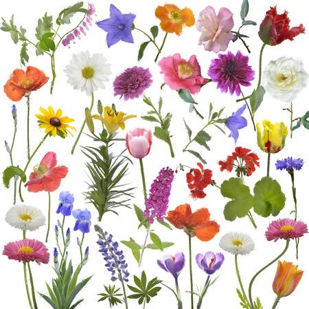 배경에 대 한 꽃의 디지털 페인팅