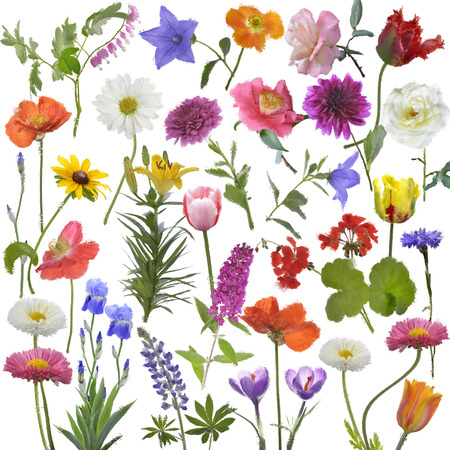 Digital Painting Of Flowers For Background Imagens
