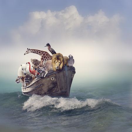 guepardo: Animales salvajes y p�jaros en un barco viejo