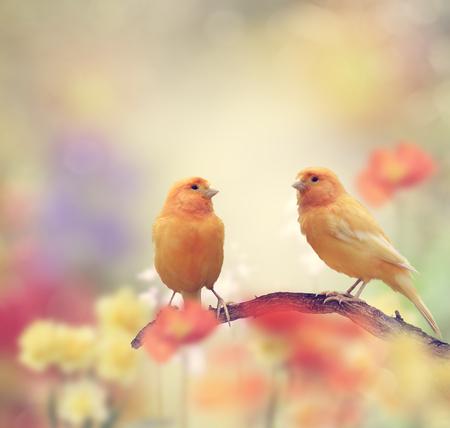 Yellow Birds Perching In The Garden