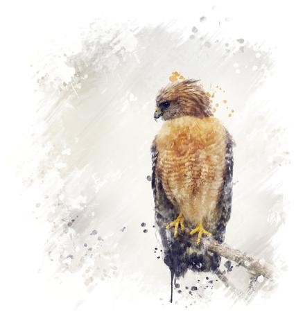 Digital Painting Of Red Shouldered Hawk