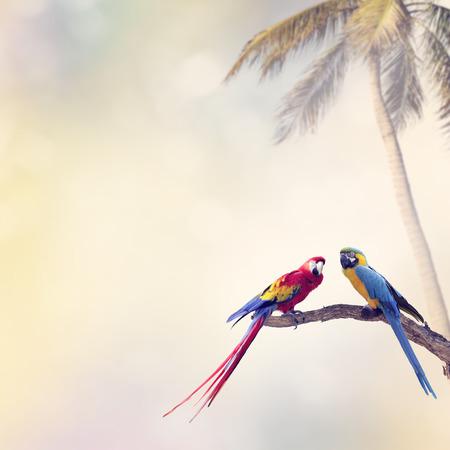 papagayo: Dos loros perca en un registro