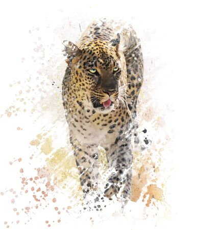 leopard: Digital Painting of Leopard on White Background