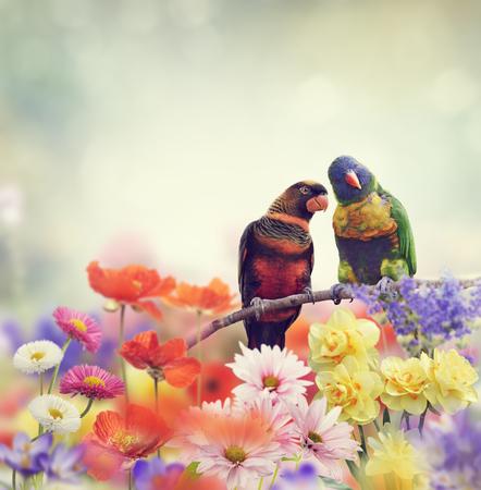 perch: Rainbow Parrots Perch in Flower Garden Stock Photo