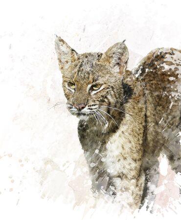 bobcat: Digital Painting Of Bobcat ,close up