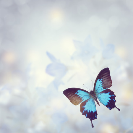 Blue Tropical Butterfly for Background Stockfoto
