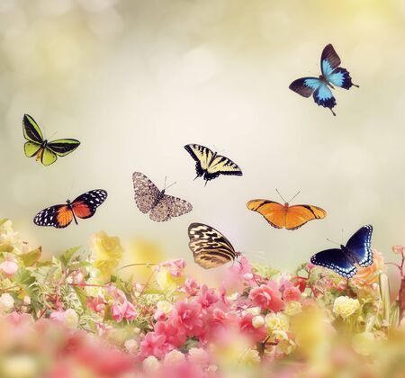 Flowers and Butterflies for Background Foto de archivo
