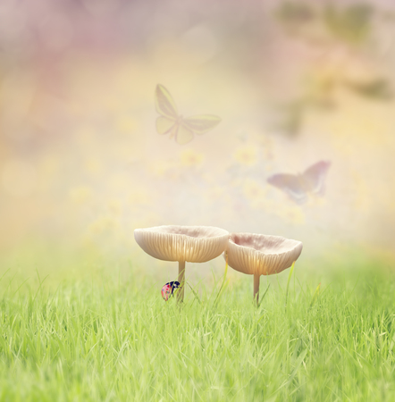 sunshine insect: Two Wild Mushrooms in the Grass