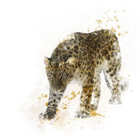 panthera: Digital Painting of Walking Leopard