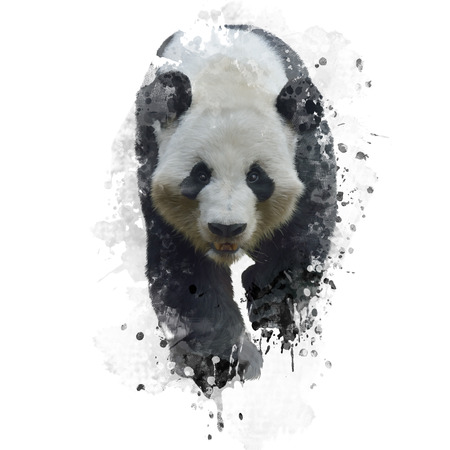 giant: Digital Painting of Giant Panda Bear