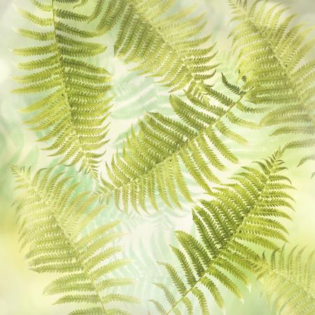 leaf pattern: Green Fern Leaves for  Background
