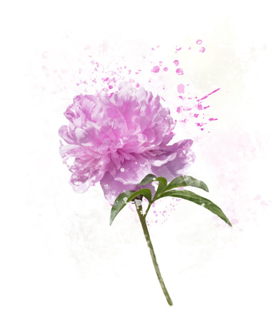 Digital Painting of Peony Flower