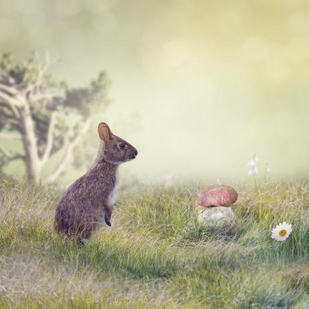 rabbit standing: Wild Rabbit Standing up in The Grass Stock Photo