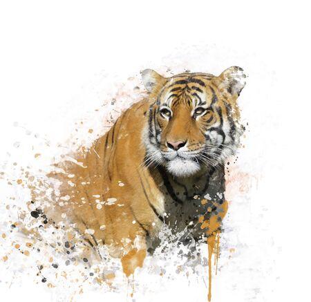 Digital Painting of Tiger Portrait