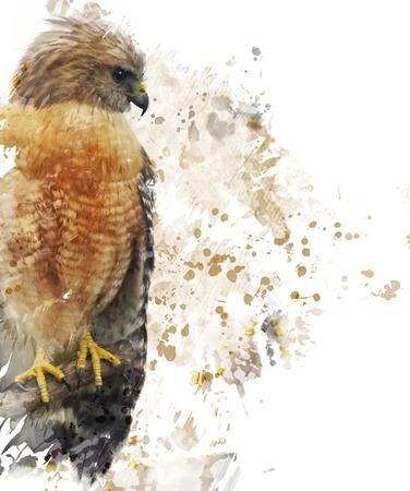 shouldered: Digital Painting Of Red Shouldered Hawk