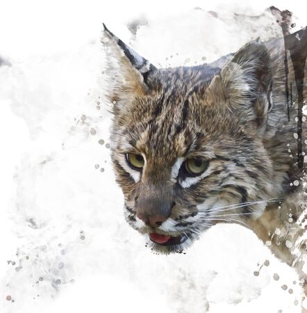lince rojo: Pintura digital del retrato salvaje Bobcat