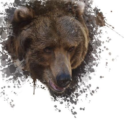 Digital Painting of Brown Bear Head Stock Photo