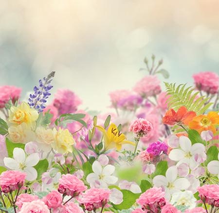 Blossom von bunten Blumen für den Hintergrund