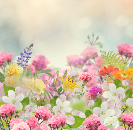 Blossom of Colorful Flowers for Background Foto de archivo