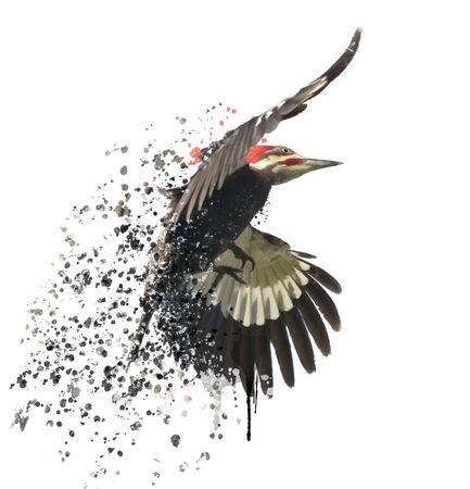 wings bird: Digital Painting of  Pileated Woodpecker