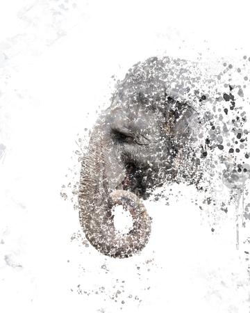 elephant head: digital painting of  elephant head