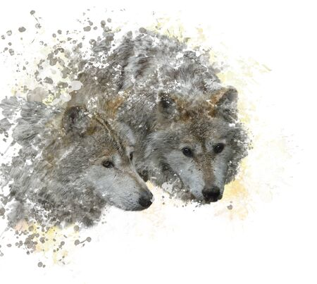 two animals: digital painting of  Two wolves