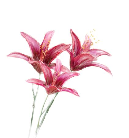 lily: digital painting of  Red Lily Flowers