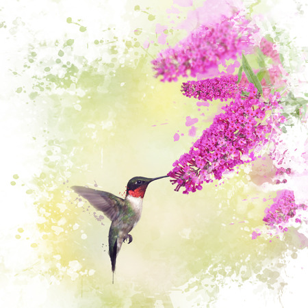 Digital painting of Ruby Throated Hummingbird and Butterfly bush Stock Photo