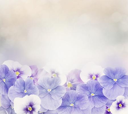 violeta: Violetas flores de colores para el fondo