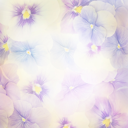 Colorful Violet Flowers for Background