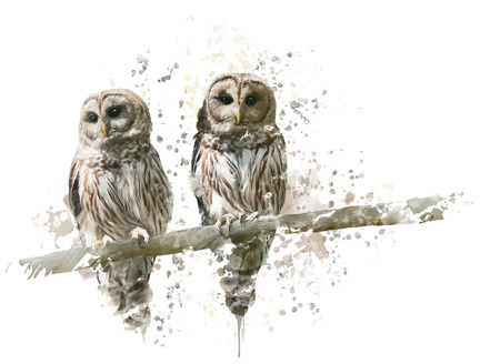 Digital Painting of Barred Owls Stock Photo - 67077439