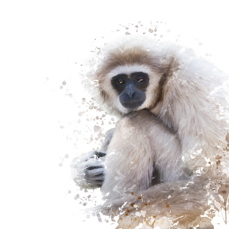 illustration and painting: Digital Painting of White-handed gibbon