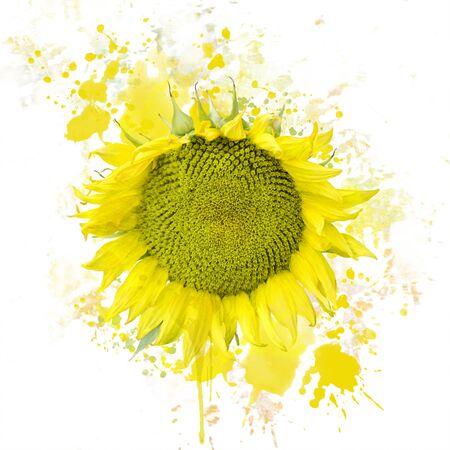 ヒマワリの花のデジタル絵画 写真素材