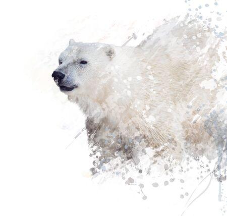 watercolour painting: Digital Painting of  Polar Bear