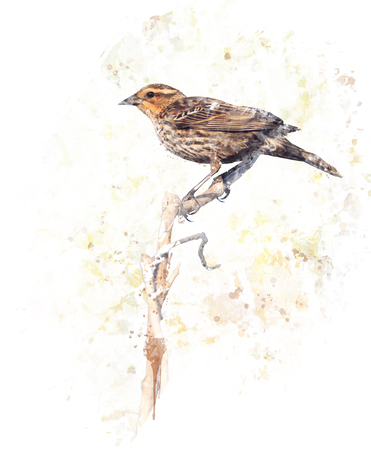 Digital Painting of  Brown Bird Perches on a Branch Imagens