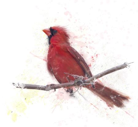 Pintura digital del cardenal norteño masculino Foto de archivo - 80508763