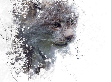 Digital Painting Of Canada Lynx