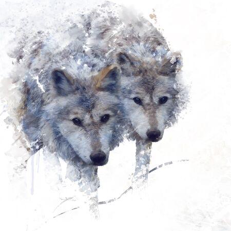 Digitaal schilderen van twee wolven Stockfoto