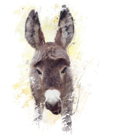 baby ass: digital painting of young donkey mule Stock Photo