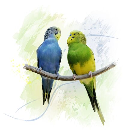 Digital Painting of Two Budgerigars Perching On A Branch