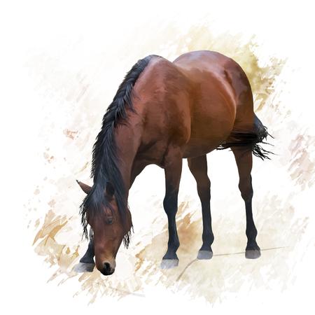 digital painting of Brown  horse Stock fotó