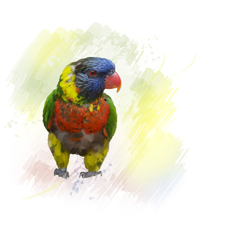Digital Painting of Rainbow Lorikeet