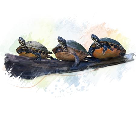 Digital Painting of Florida Turtles Stock Photo