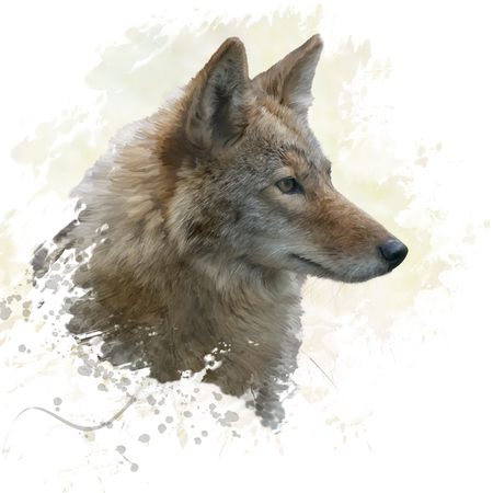 digital painting of coyote portrait
